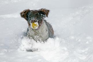 Wintereinbruch_Brigachtal_HJG101217_20
