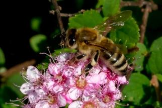 Insekten_HJG20180616-05
